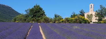 champ de lavande sur la colline du Chatelard