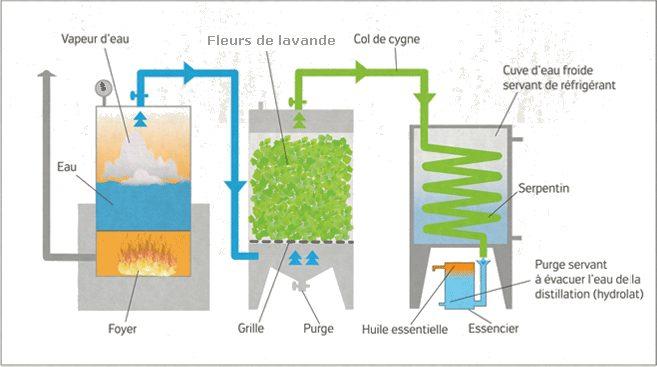 Principe de la distillation des fleurs de lavandin